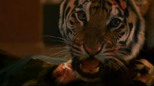 tiger-in-burning-bright